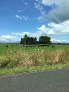 牛、空、100キロ