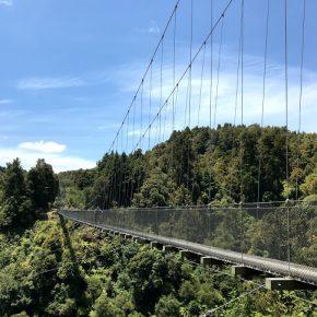 3度目のロトルアMTB日記⑥「Timber Trail」84km一気走り!